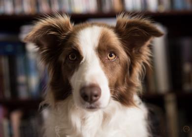 Syrah Portrait